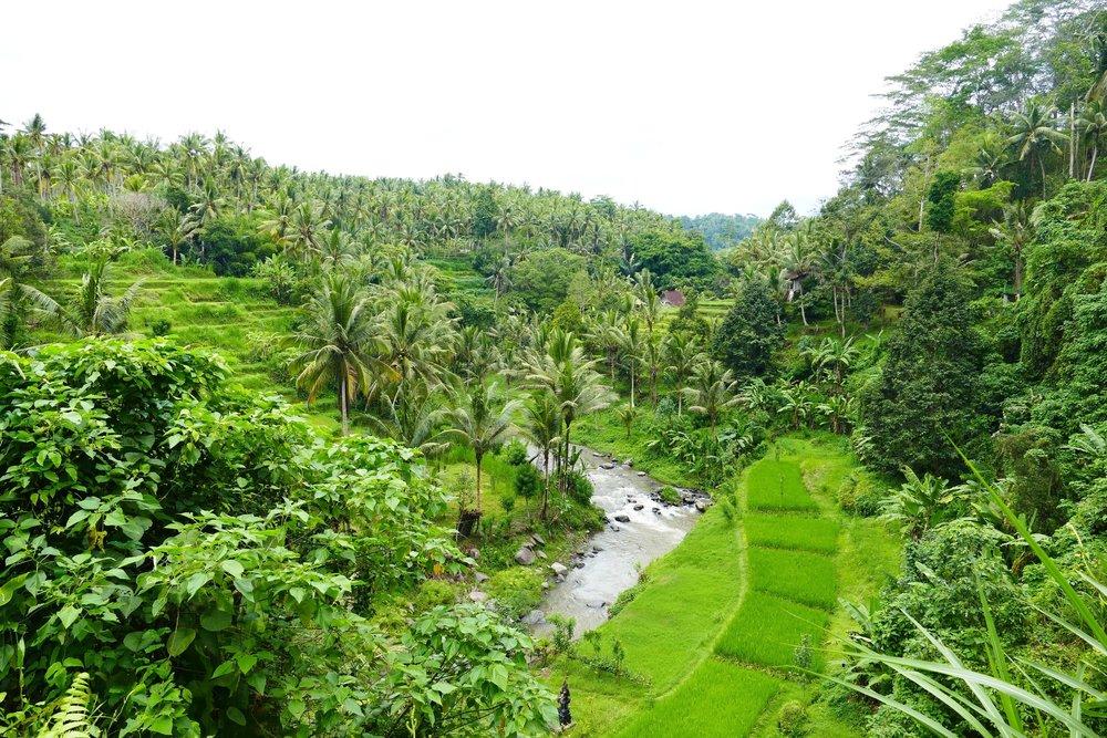 Rizières Ubud, Bali, Indonésie