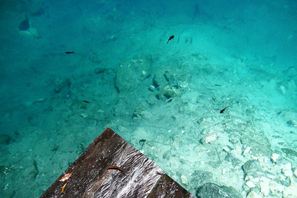 Cenote xuxha mexico (82).JPG