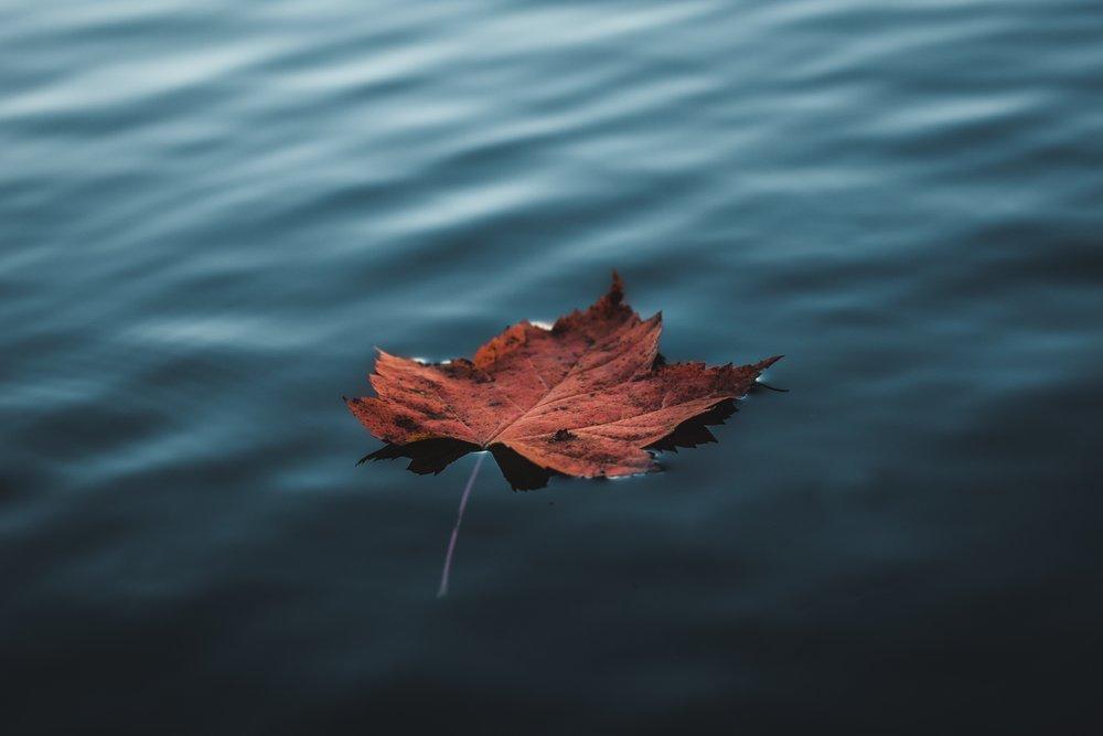 Årstidernes skiften - og vores indre sæsoner
