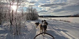 Hundekjøring HH2.jpg