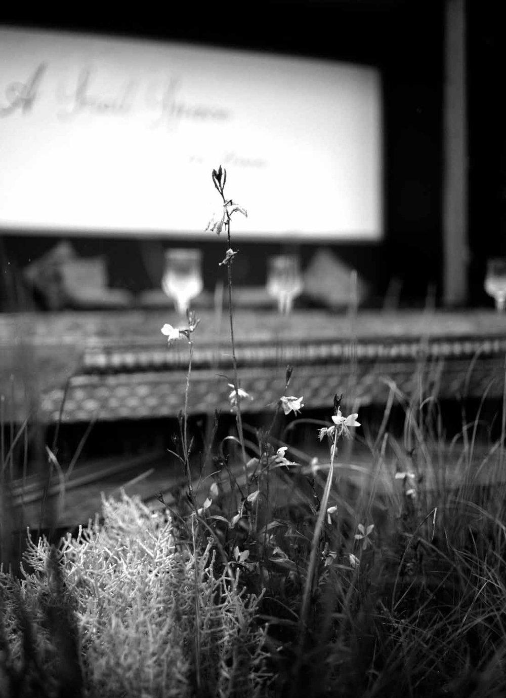 gaura-garden.jpg