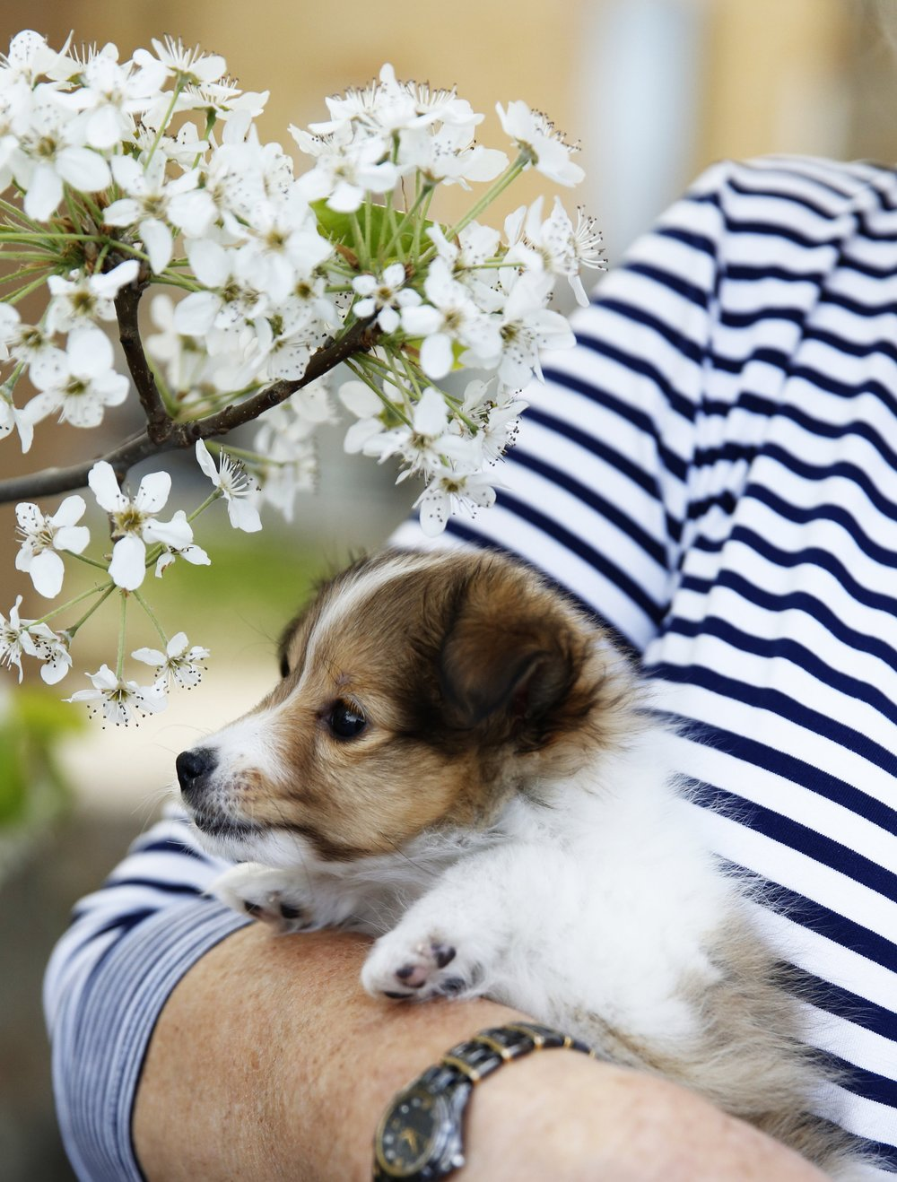 This year I purchased a feisty little sheltie puppy so the new hobby will be dog training. -