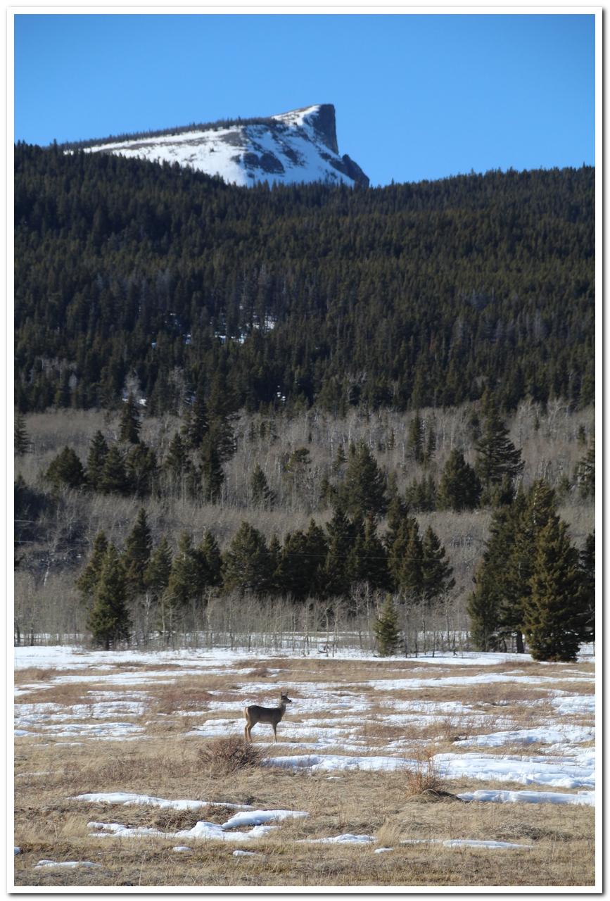 Whitetail Deer graze below Napi Point