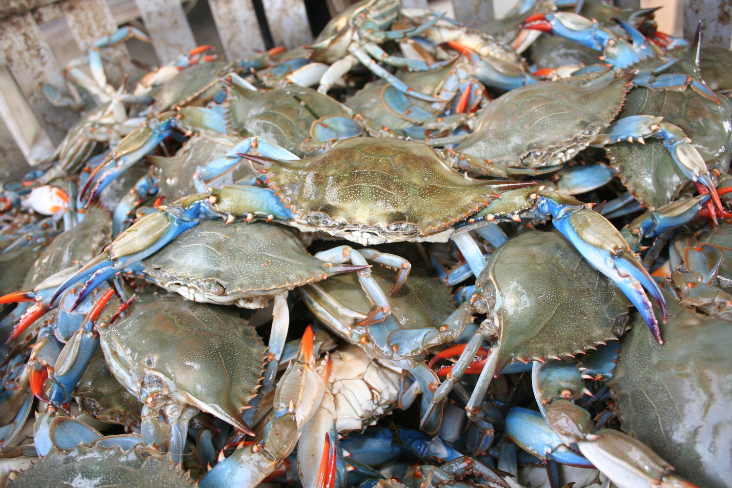 j w seafood chesapeake bay blue crabs