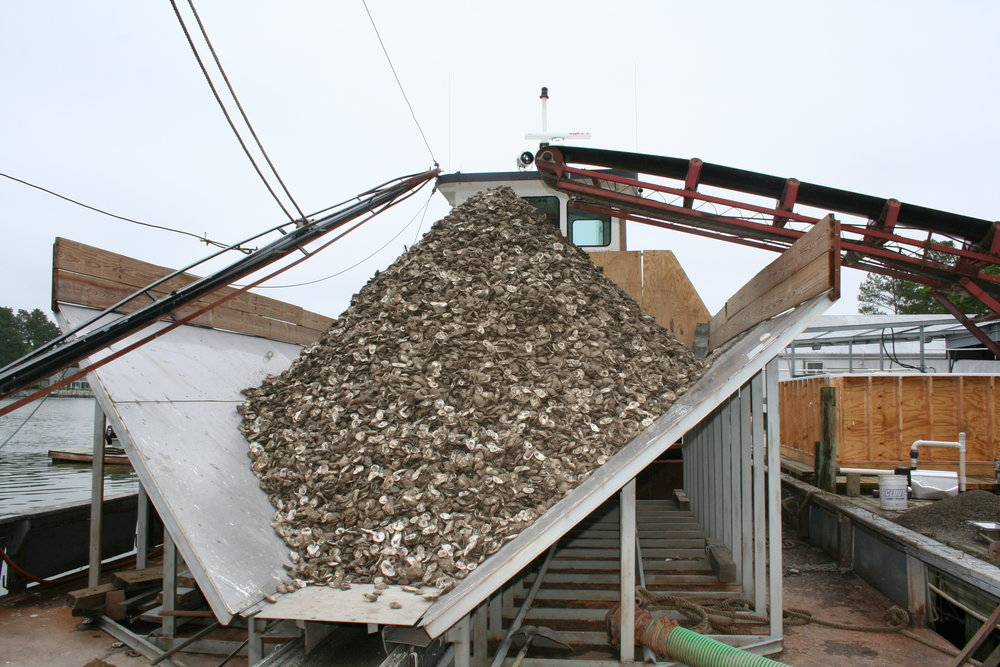 Oyster Shell Planting Barge