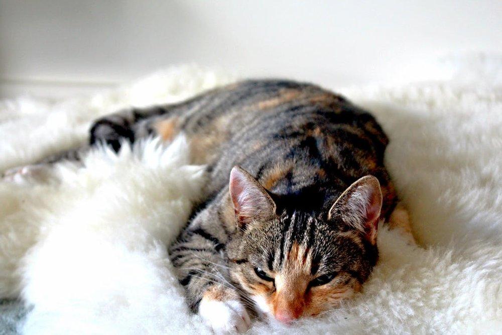 Katnapolsky Kattenhotel het beste kattenhotel van nederland