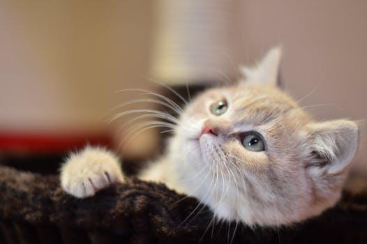 Katnapolsky kattenhotel de beste plek voor je kat