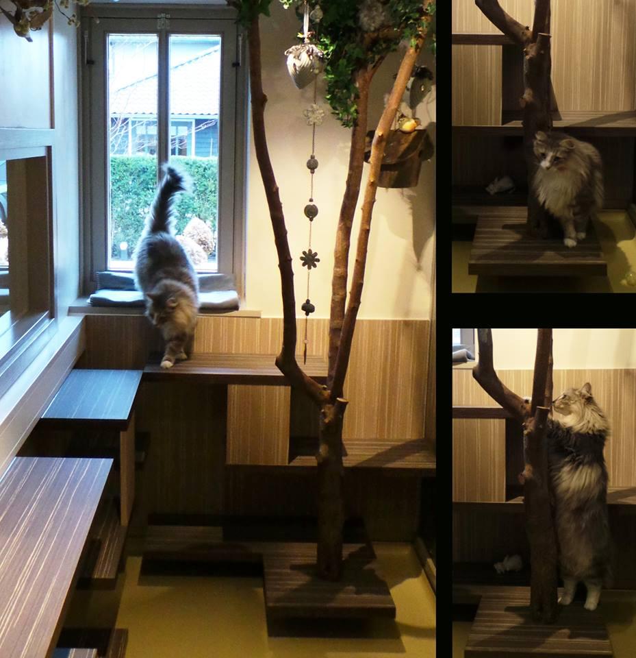 Katnapolsky Kattenhotel ruime speelkamer