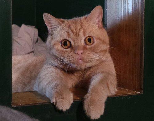 Katnapolsky_Kattenhotel_het_beste_kattenhotel_van_.jpg