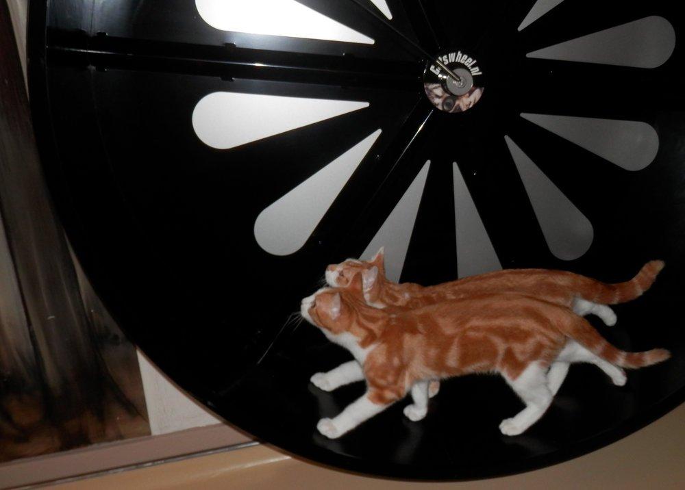 Katnapolsky_kattenpension_beschikt_over_een_katten.jpg