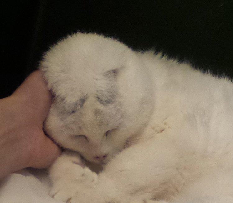 Siep is prachtig en 100% kat.