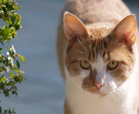 Twijfelt u aan de geldigheid van de vaccinaties van uw kat: neem contact op met ons. -