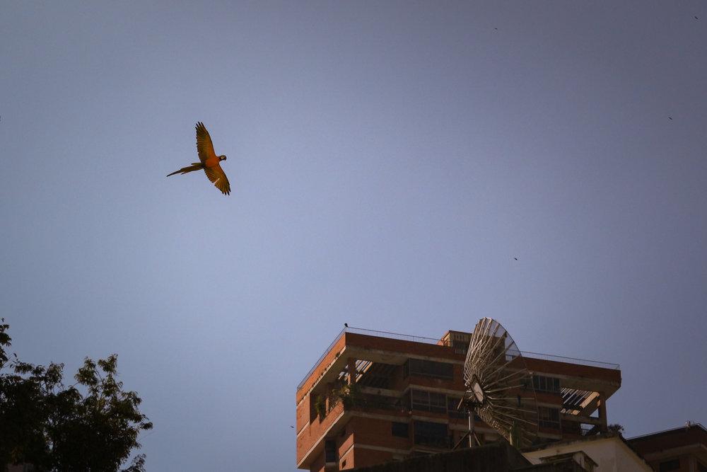Caracas_35.jpg