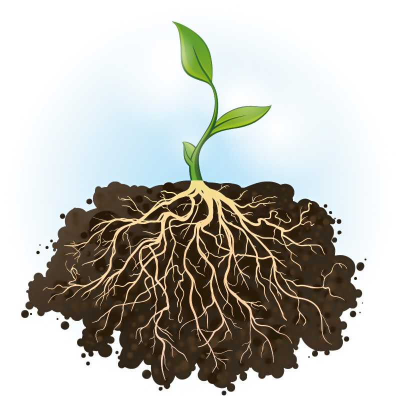 Plant-roots-go-to-extreme-lengths-to-find-water.jpg