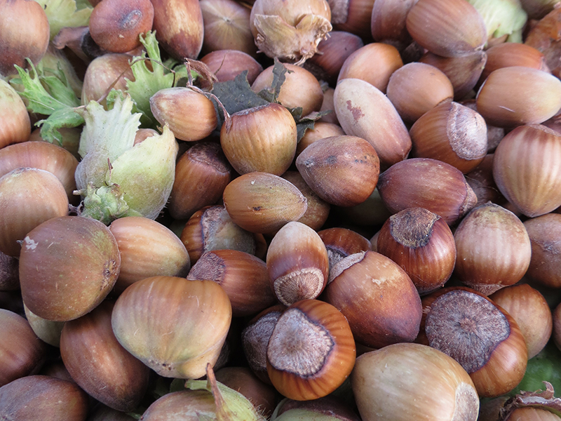 Foraged hazelnuts...