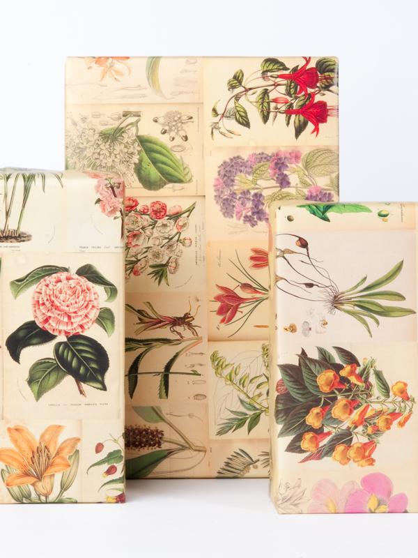 Norman's Printery Botanical Gift Wrap