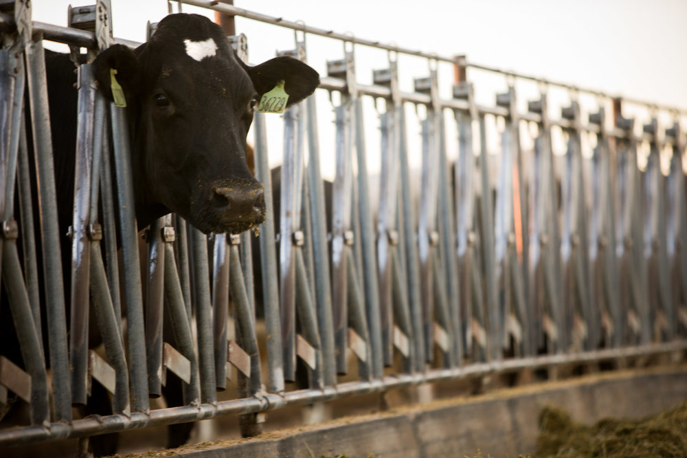 awstudio_cargill_agriculture_06.jpg