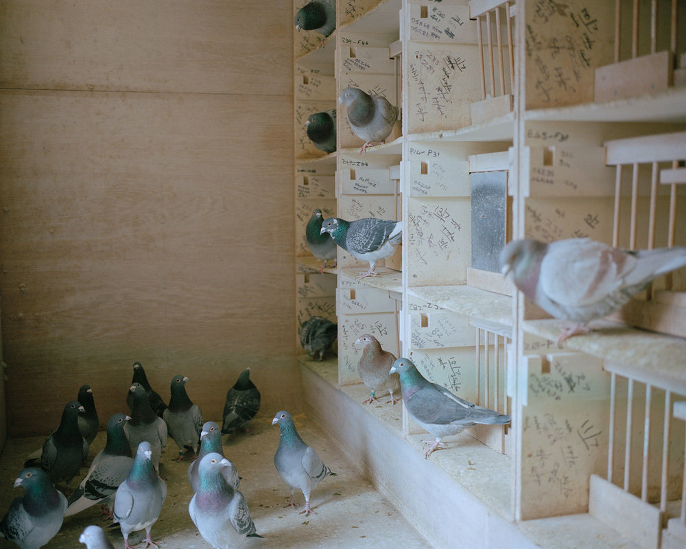 Pigeon loft, Mansfield, Nottinghamshire.