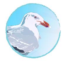 spirit animal seagull