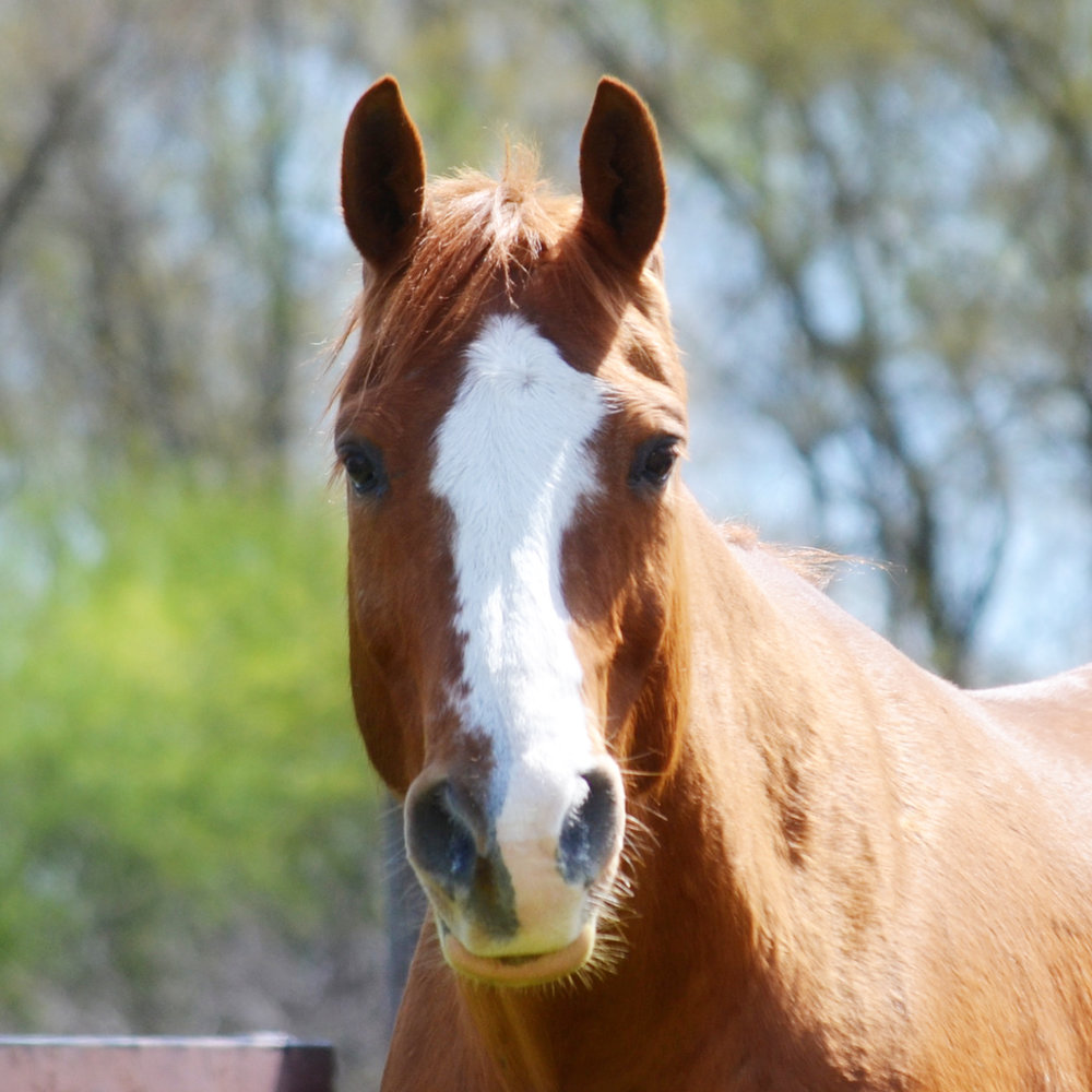 Winston 2002 AQHA/APHA Gelding Donated By: Donna Woundenberg