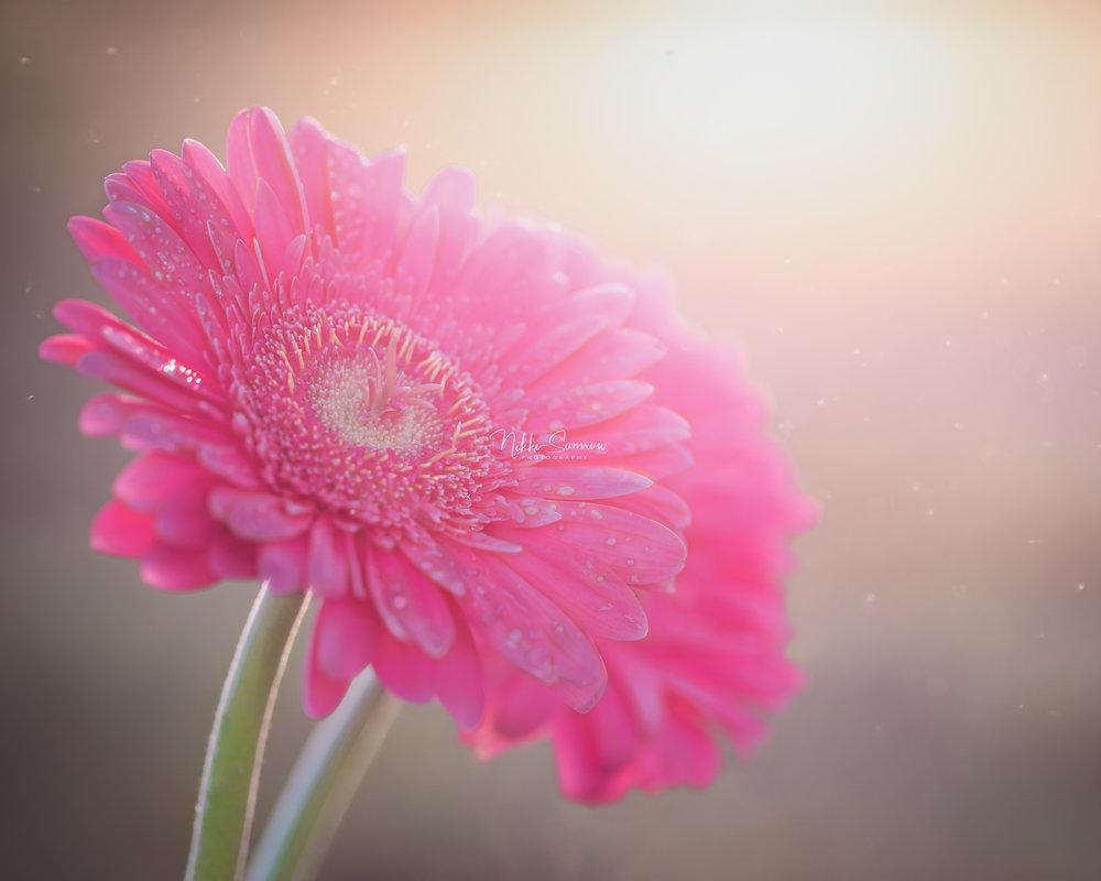 daisysparkle_web.jpg