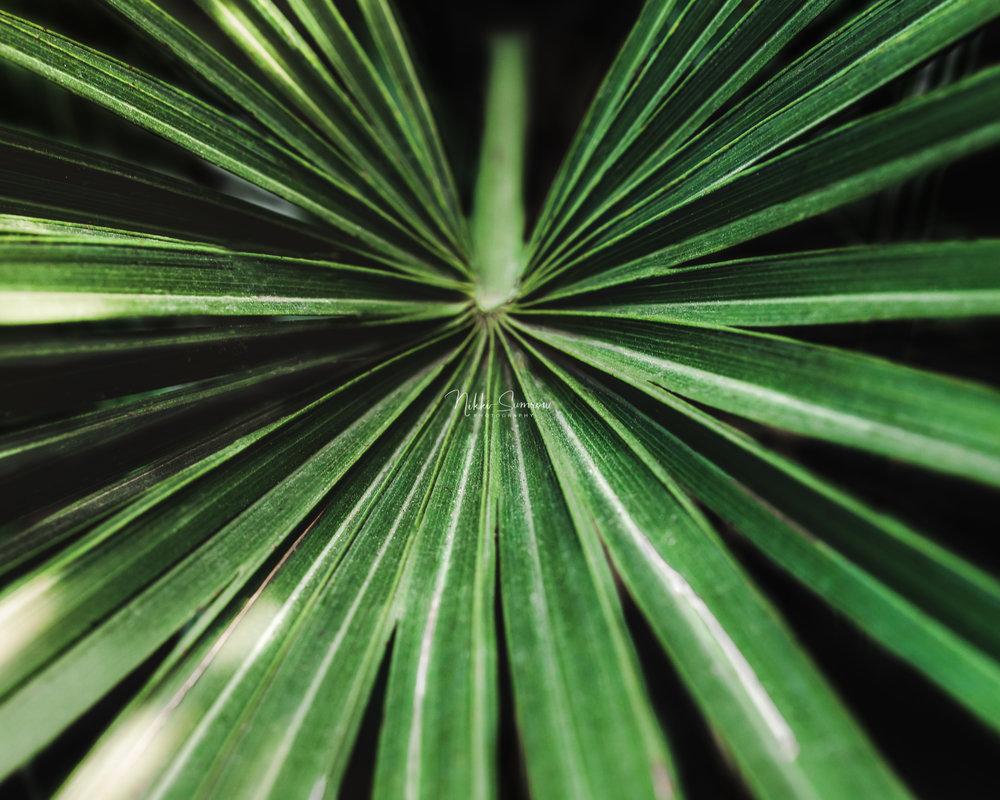 palm_web.jpg