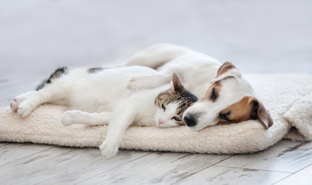 relationships first dogcatiStock-905633812.jpg