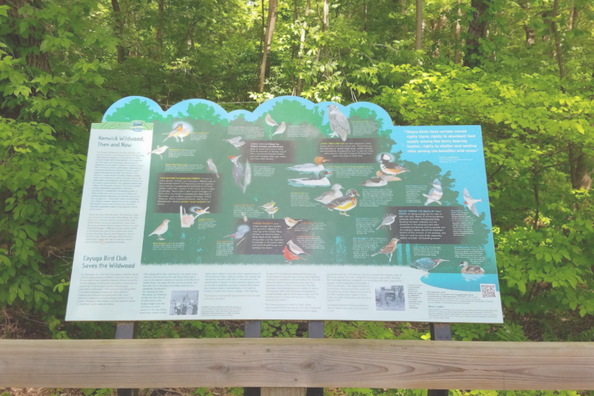 Renwick Wildwood Interpretive Panel & Ecological Restoration   In 1914, the Cayuga Bird Club's (CBC) created an interpretive panel which tells the story of how the woodland is important for bird life. It illustrates many of the interesting and important birds that reside in or pass through the woods. Many thanks to the Tompkins County Strategic Tourism Planning Board, Cayuga Bird Club, and the Cayuga Waterfront Trail Initiative for supporting this project.   See a detailed description in PDF format  here .