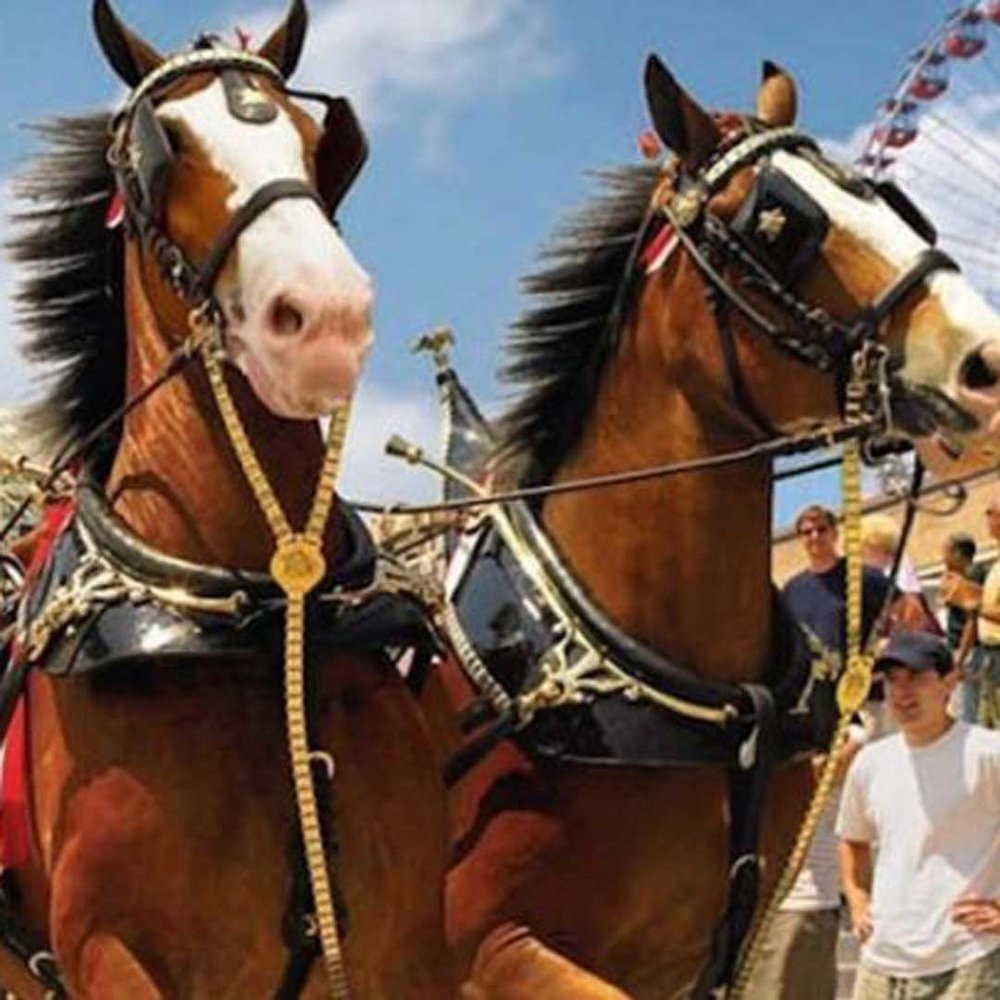 The Budweiser Clydesdales will be welcoming fans at Joe Riley Park in Charleston, SC