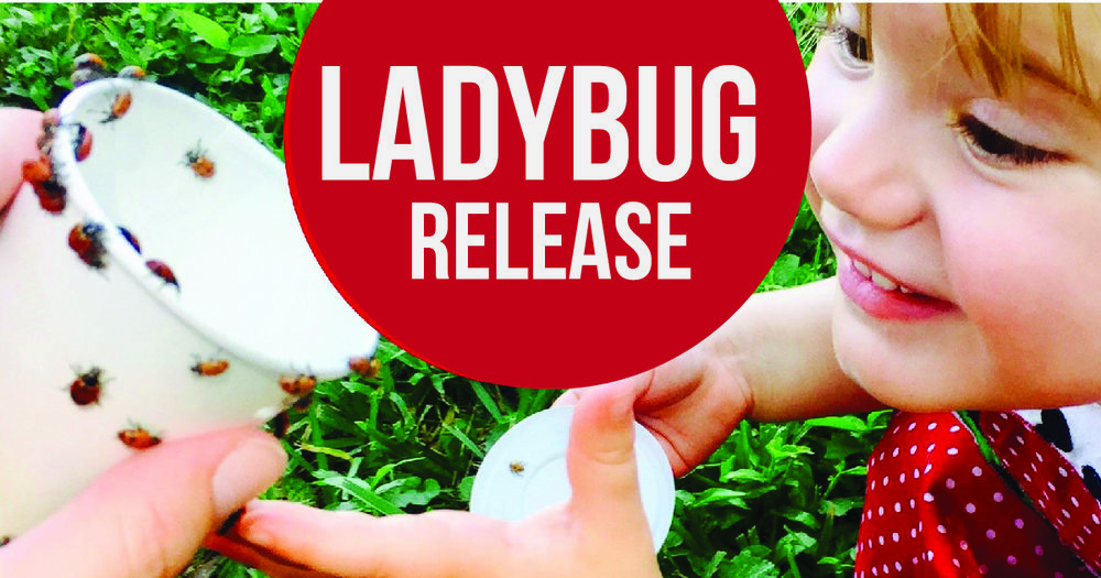 The largest ladybug release yet! 20,000! Prizes will be awarded for the best ladybug costume.