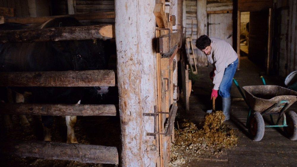 Mein Alltag... Der Kuhstall ist übrigens über 100 Jahre alt.