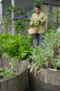 cuvee-garden-herbs