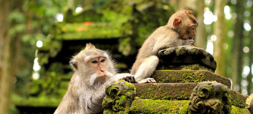 monkey-forest-ubud-bali.jpg