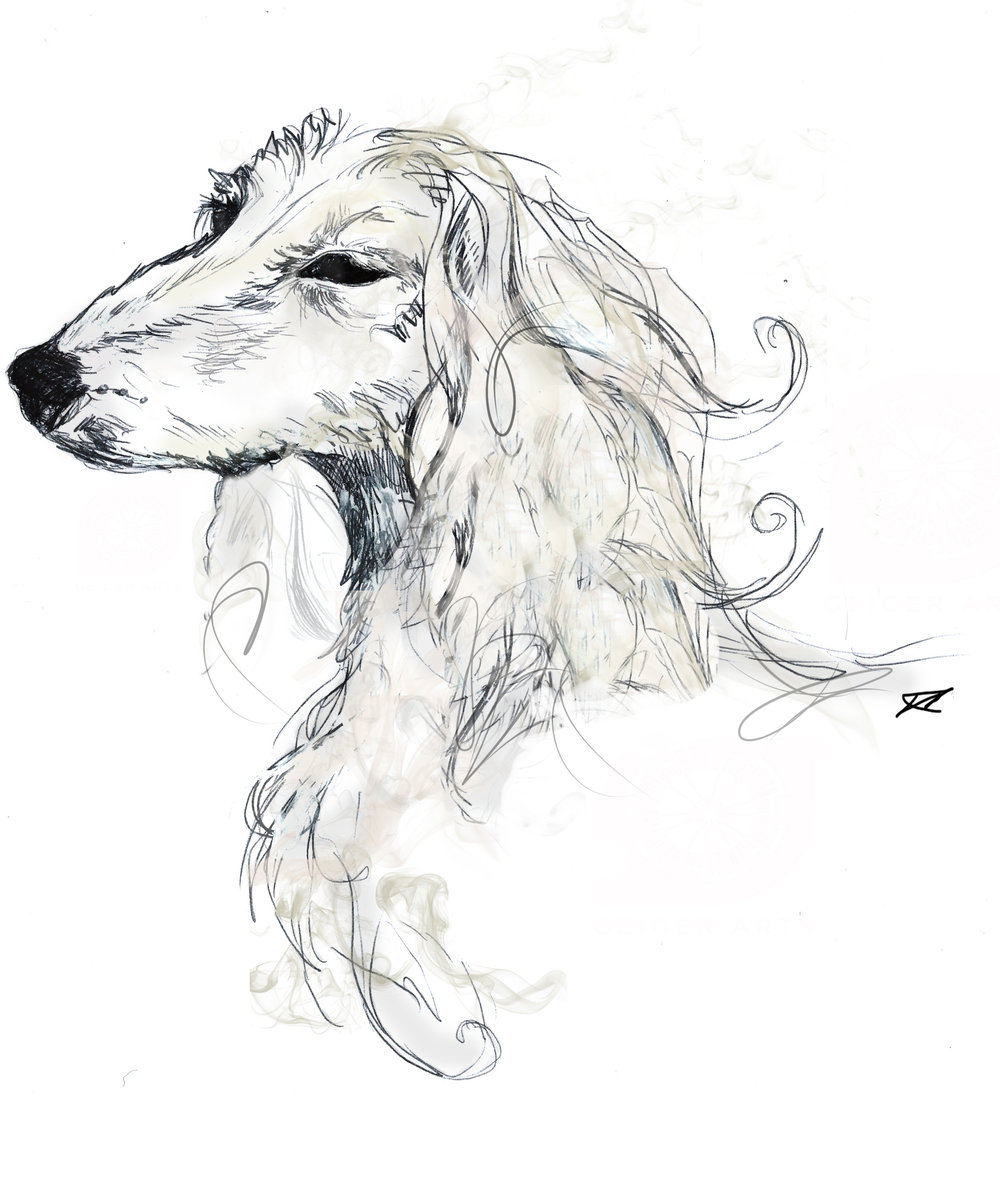 About — Louisa the Afghan Hound