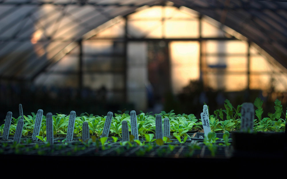 reduced green house at sunset, propogation nursery pine creek scattered seeds.jpg