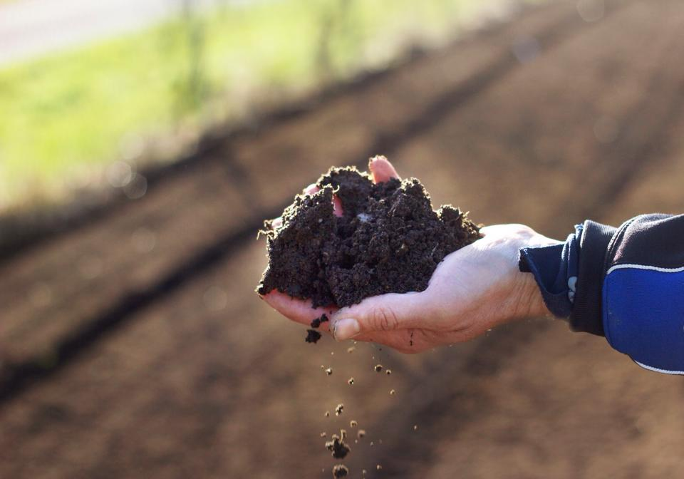 scattered seeds dirty hand.jpg