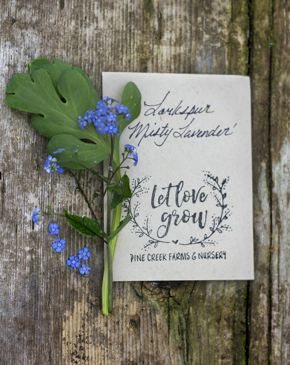 reduced_pc_events_seed_packet_forget_me_nots_marry_me_in_monroe.jpg