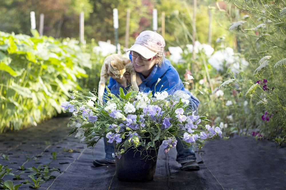 reduced_ss_gwen_sulley_sweet_peas_lavender_summer.jpg