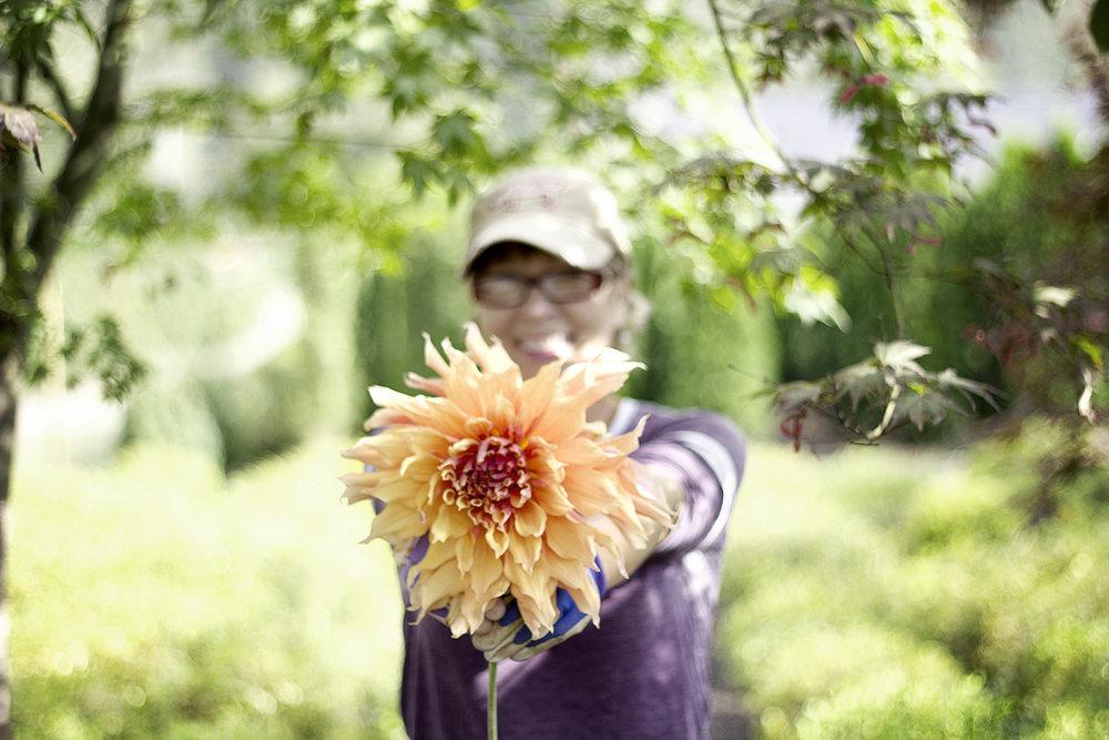 reduced_ss_dahlia_sherwoods_peach_summer_garden.jpg