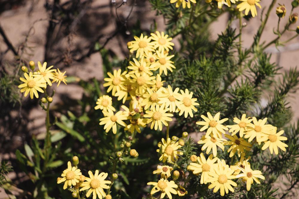 WIldflowers-0405-2.jpg