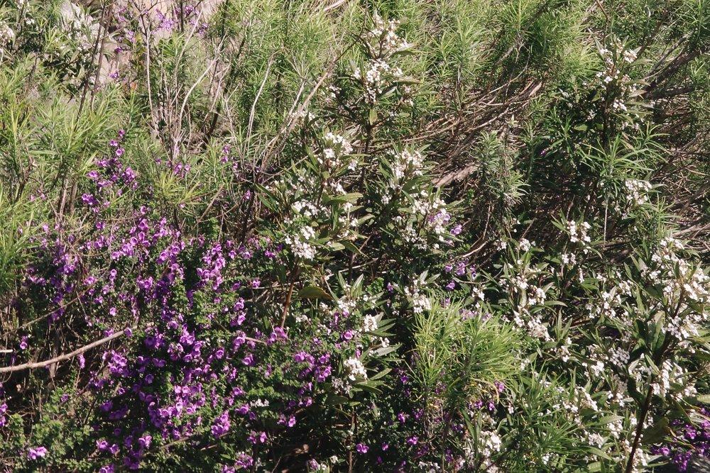 WIldflowers-0137-2.jpg