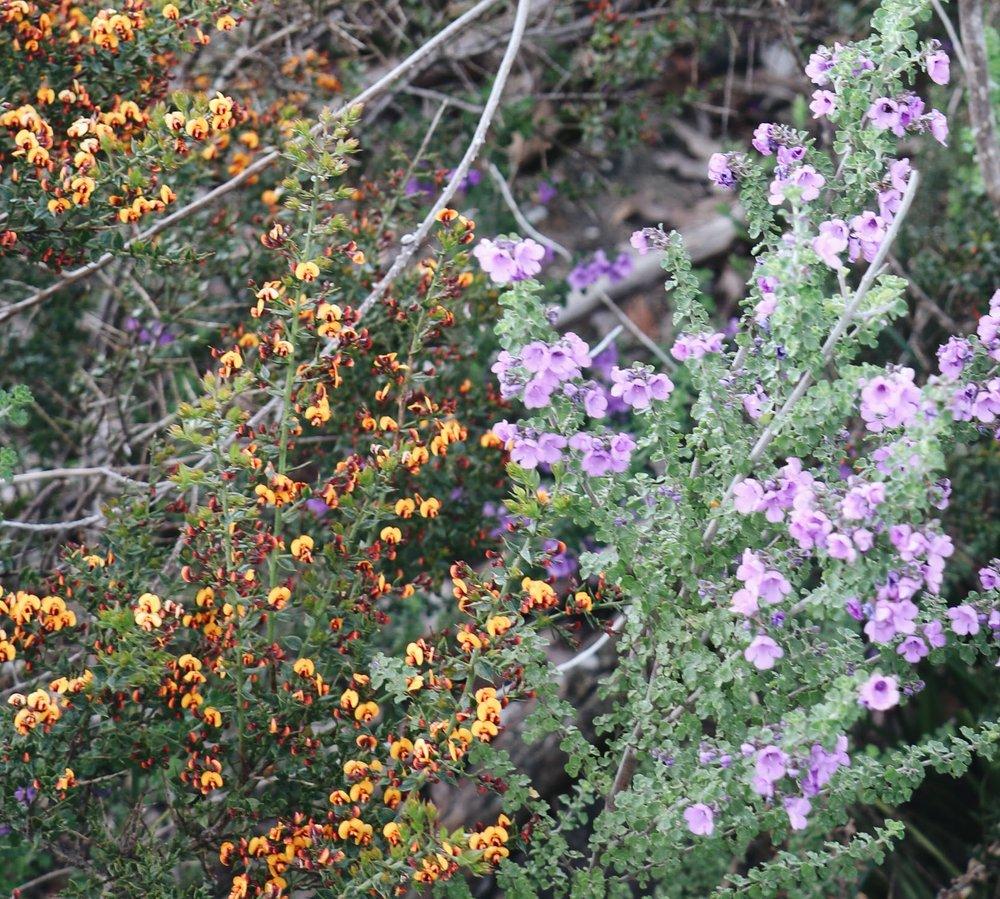 WIldflowers-0130-2.jpg