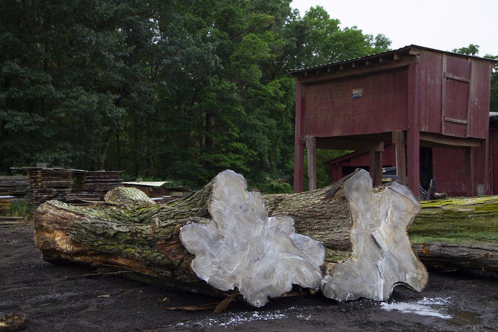 raw logs.jpg