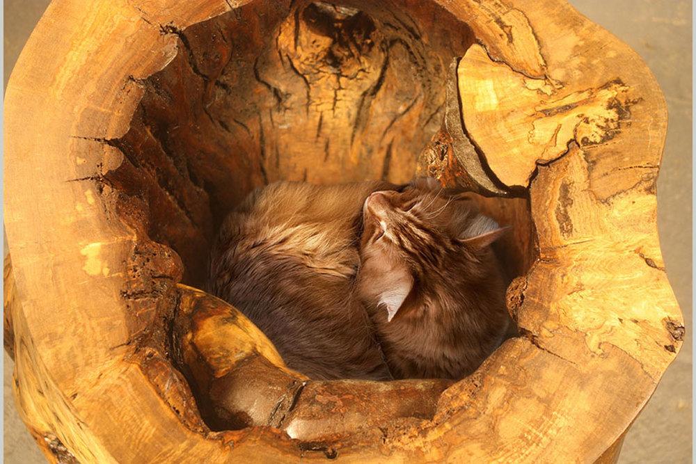 2014_11_14_04 Hollow Log Cat's Coffee Table.JPG