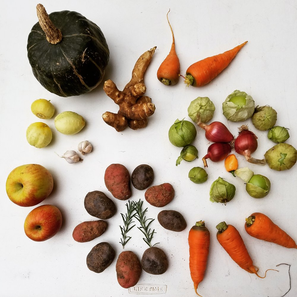 A CSA share from our Fall Session