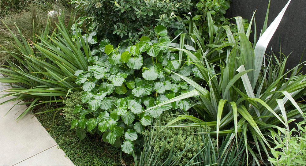 local_Landscape_Architecture_Residential_Planting_Mix.jpg