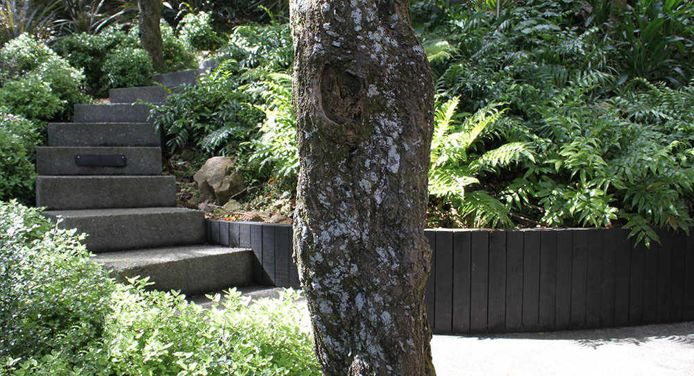 Local_Landscape_Architecture_Residential_Planting_Insitu_Steps.jpg
