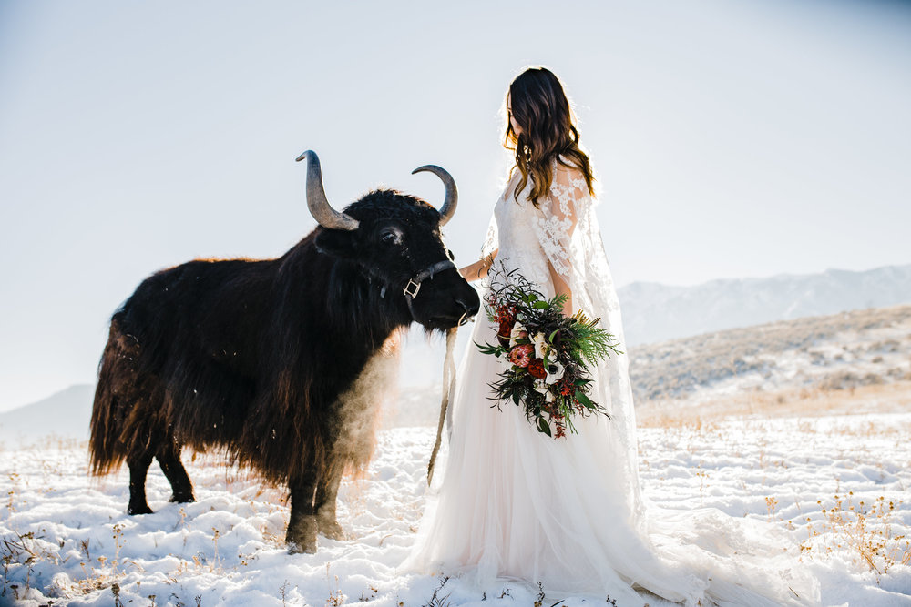 logan utah winter wedding