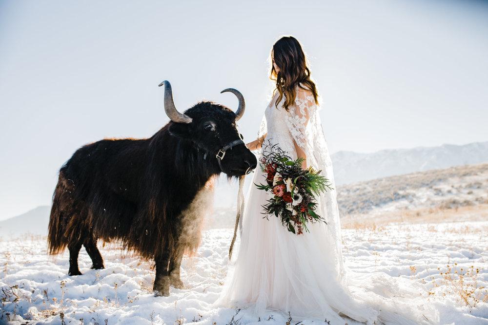 logan utah winter wedding