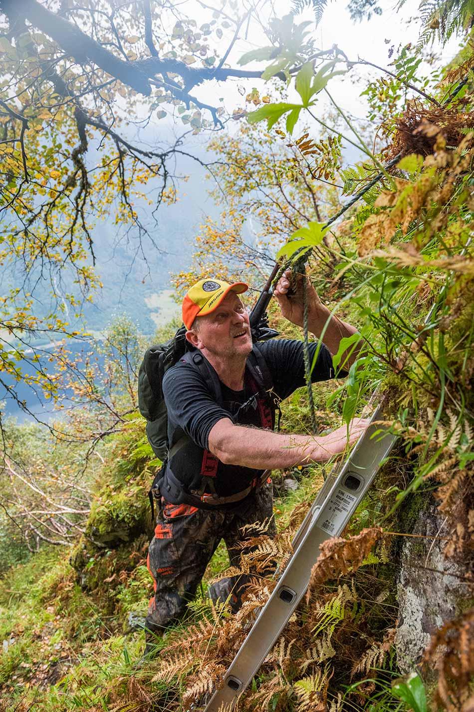 Jaktterrenget i Hyestranda er så bratt at Andreas Røyrvik og jaktlaget brukar stige opp hamrane.